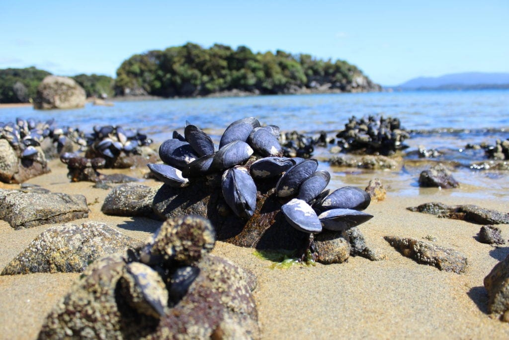 Clams at low tide
