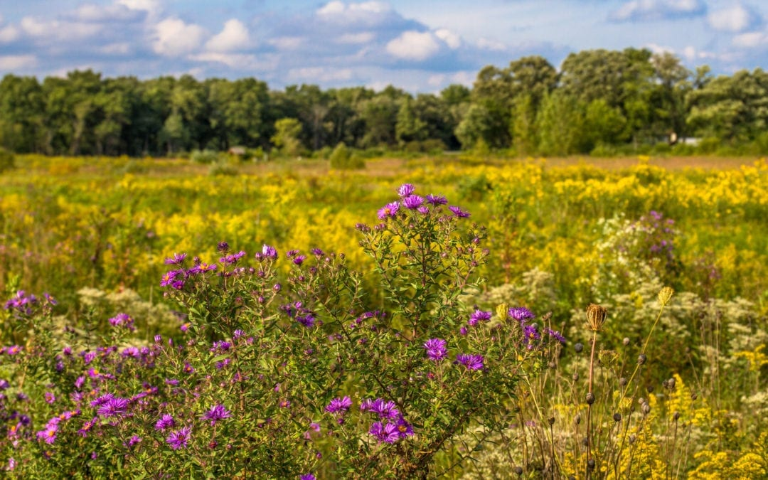 What Prairies Can Teach Us About Optimizing Organizational Resources