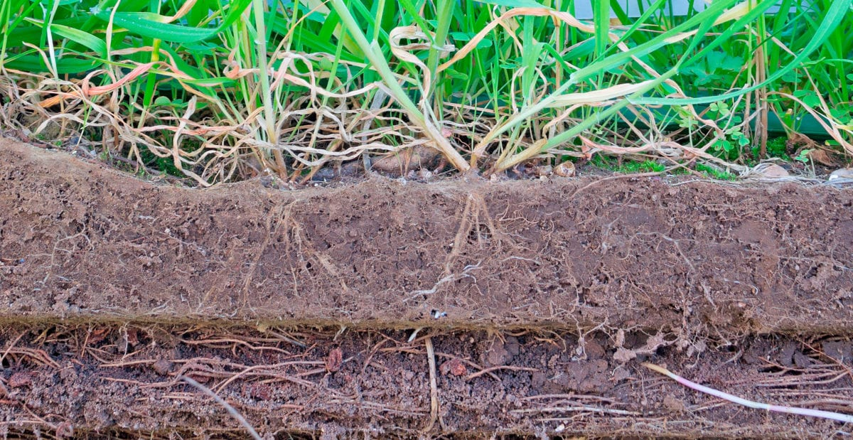 green grass and brown soil