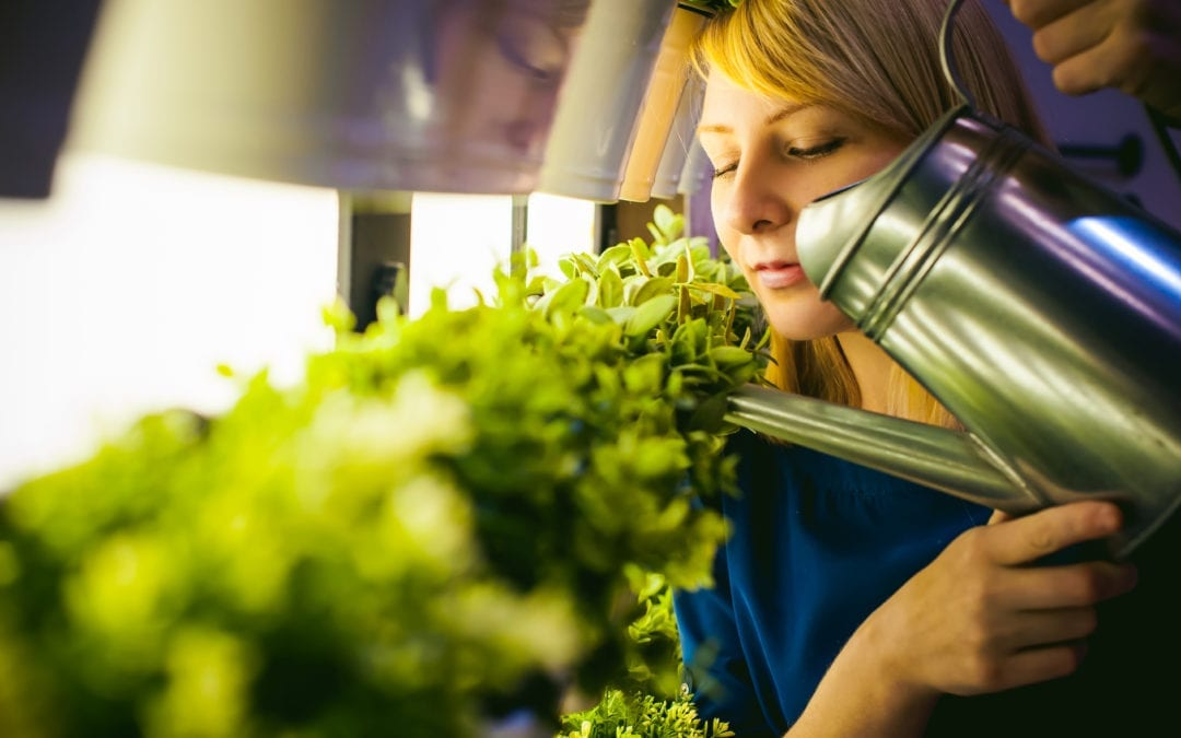 What Do Greenhouses and Innovation Have in Common?