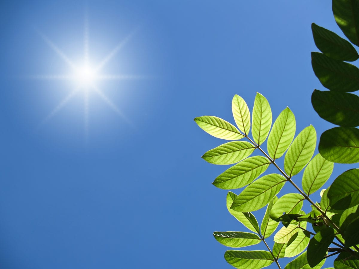green foliage with blue sky