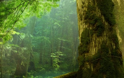 3 Reasons Nature Doesn't Need a CEO